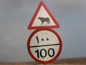牛に注意(サラーラの山間部や砂漠でたまに見られる)