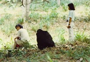 1982年フィールドワーク中の長谷川先生ご夫妻と野生チンパンジー(マイケル・スタンレー氏撮影)